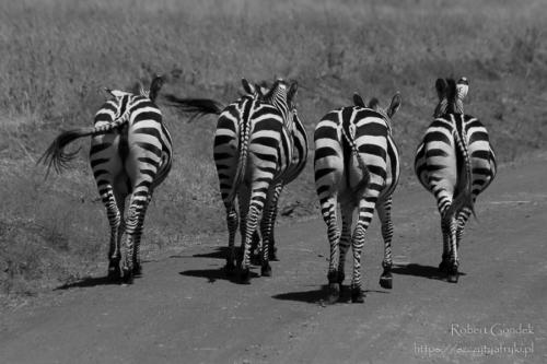 Nairobi National Park - tyłeczki
